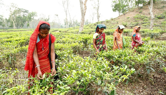 Clean water finally flows to transform lives of tea pickers in Bangladesh