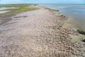 Huge swathe of Australian mangroves 'die of thirst'