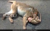 Baby monkey mourns its mother's death (Video)