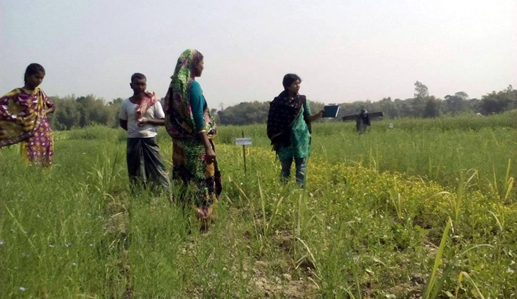 Government to provide 15% subsidy on organic farming