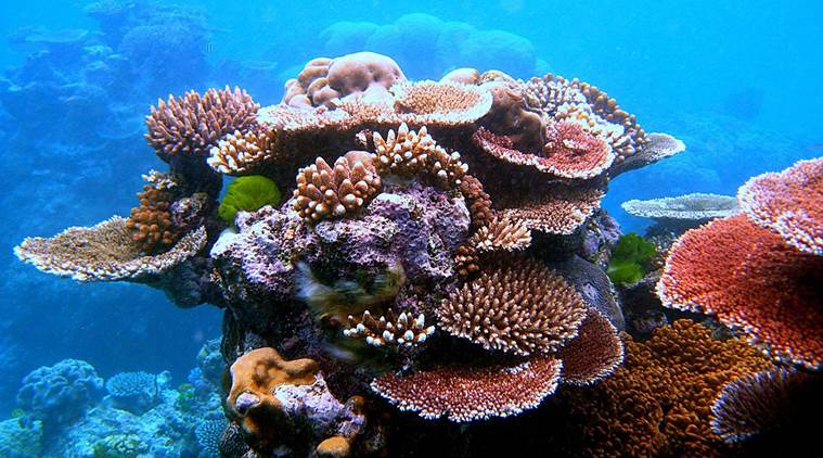 Indonesia summons UK envoy over coral reef destruction