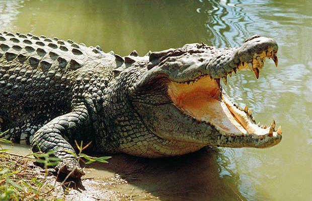 Australia teen miraculously escapes crocodile jaws
