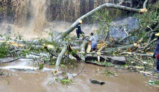20 students die in freak tree accident in Ghana