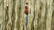 Jute set to make a strong comeback