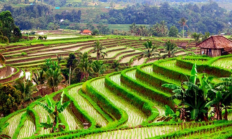 Bali named the best global travel destination for 2017