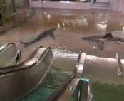 Drunken man jumping into pool full of sharks