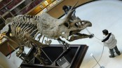 Scientists uproot dinosaur family tree