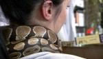 Python gives neck massages to people (Video)
