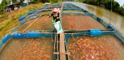 Call to expand modern fish farming technologies
