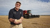 New Zealand farmers harvest world record wheat crop
