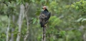 One quarter of Bangladesh is safe from recently exposed vulture-killing drug