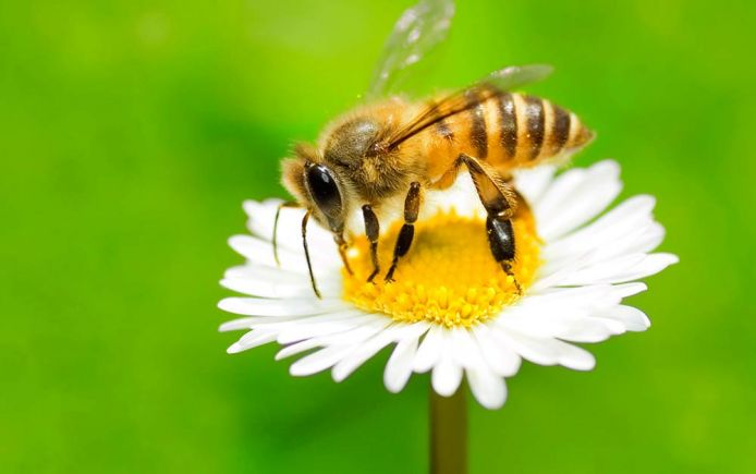 Bees can see much better than thought: scientists