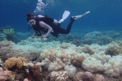 'Zero recovery' for corals in back-to-back Australia bleaching