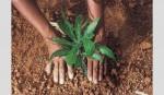 Tree plantation campaign held