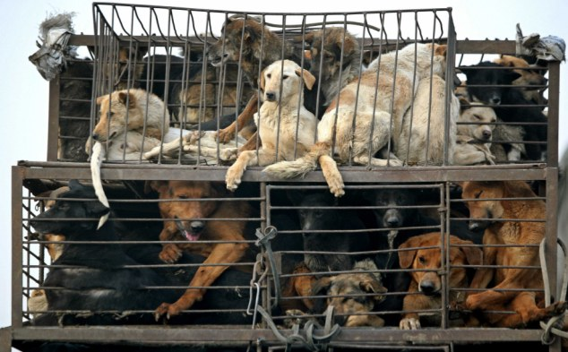 Taiwan bans the consumption of cat and dog meat