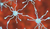 Brain cell therapy 'promising' for Parkinson's disease