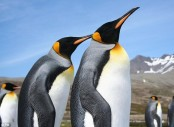 Ancient poo shows Antarctic penguins' volcanic past