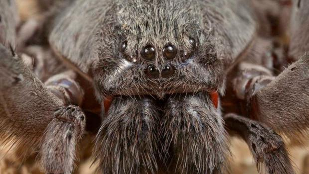 New species of cave dwelling spiders identified