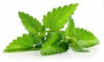 Pudina is a super herb to beat summer heat and fight indigestion