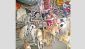 "The ""Dog Lady of Delhi"" looks after over 400 strays"