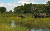 Life and death battle between crocodile and elephant (Video)
