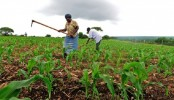 90pc agriculture loan disbursed in 9 months