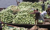 Watermelons flood market, but price too high