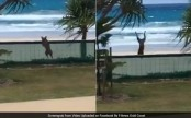 6 million views for overexcited dog somersaulting right over a fence (Video)