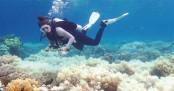 Vinegar offers hope in Barrier Reef starfish battle