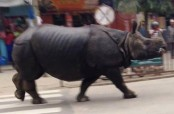 Terrifying scenes as rhino goes on rampage in streets of Nepal (Video)