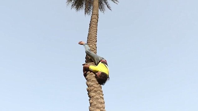 Indian construction worker climbs 70ft trees upside down (Video)