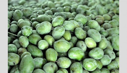 Bad weather affects mango yield