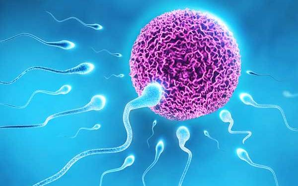 New testes repairing cells may prevent infertility