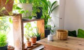 How a green lifestyle can cool your house