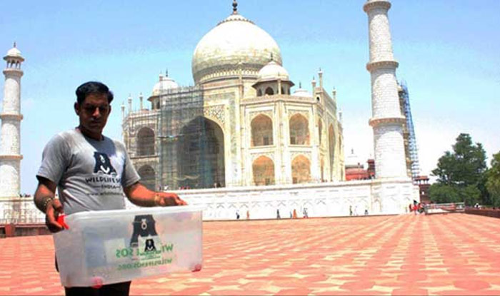 Thirsty snake visits Taj Mahal, causes panic among tourists (Video)