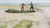 Thousands give last drive to earn meal from deep Haor waters