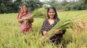 20pc allocation of national budget demanded for agriculture sector