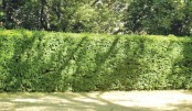 Cities need 'hedges as well as trees'