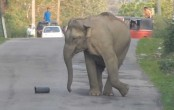 Joyful elephant playing on the highway halts traffic for 30 minutes in Assam (Video)