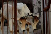 Kerala chief minister slams centre's cattle sale ban