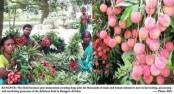 Litchi business creates huge jobs in Rangpur division