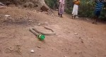 Cobra in agony after swallowing plastic bottle, spits it out (Video)