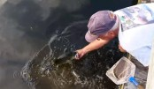 Man catches fish with bare hands (Video)