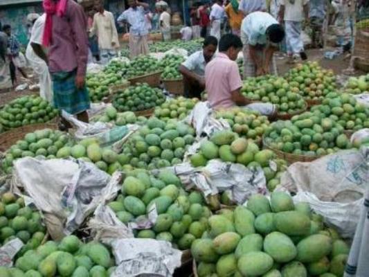 Brisk mango business in Rajshahi and Chapainawabganj