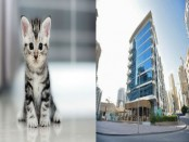 Hotel hires cats to help beat stress