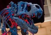 Tyrannosaurus rex was not feathery, study says