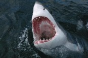 Hollywood seeks to scare new generation with shark thriller