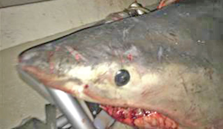White shark leaps into fisherman's boat