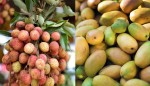 Fruits still being treated with chemicals