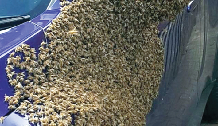 Woman gets bees in her bonnet